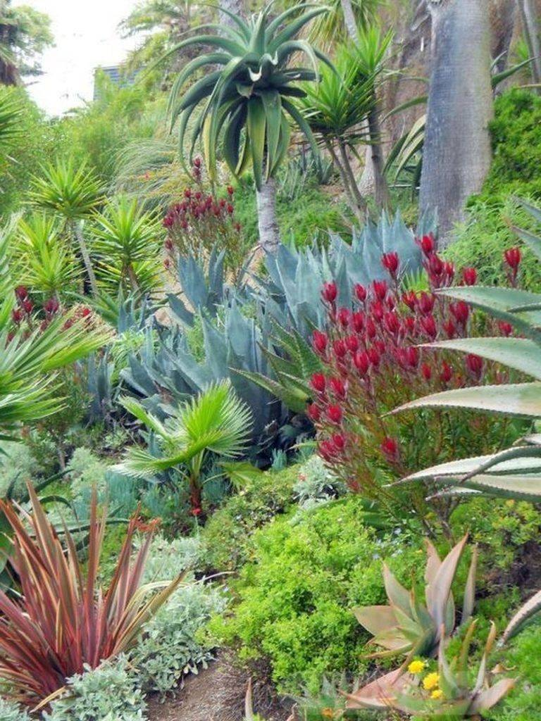 tropical garden ideas-852447035696204512