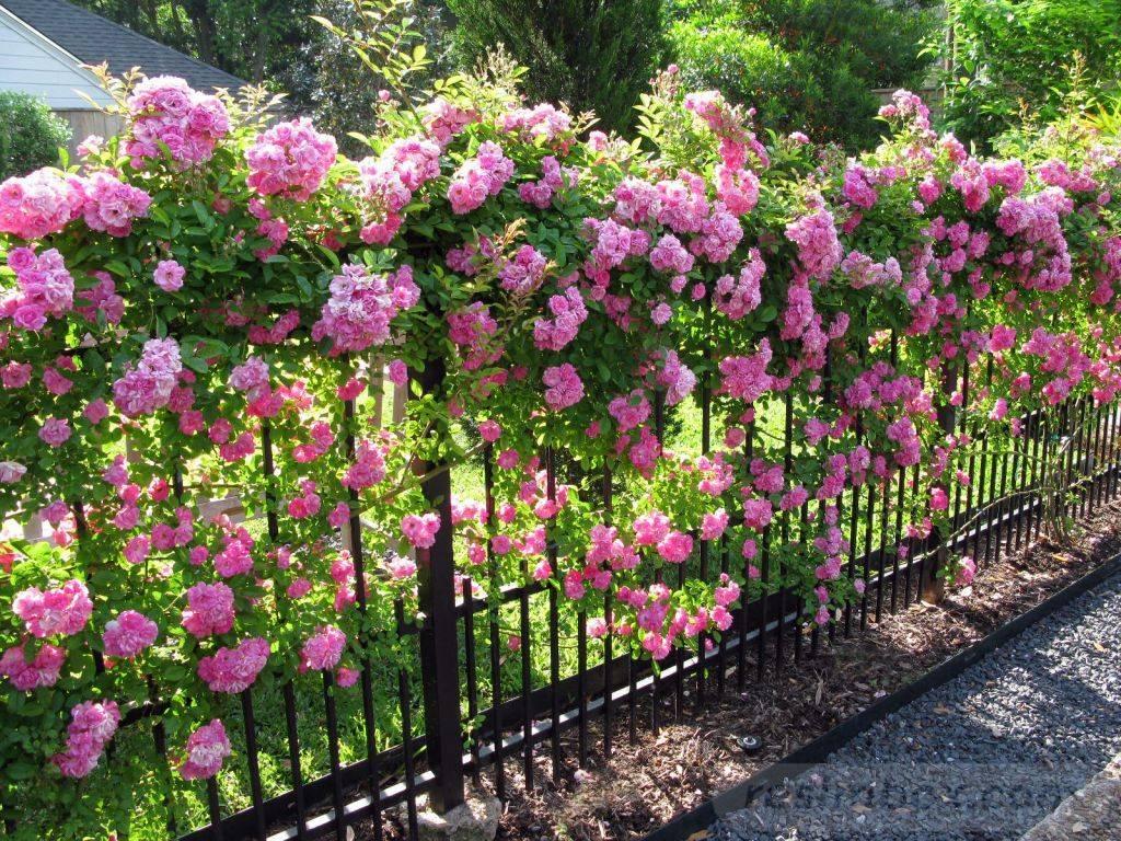 diy easy garden ideas-177047829079400930