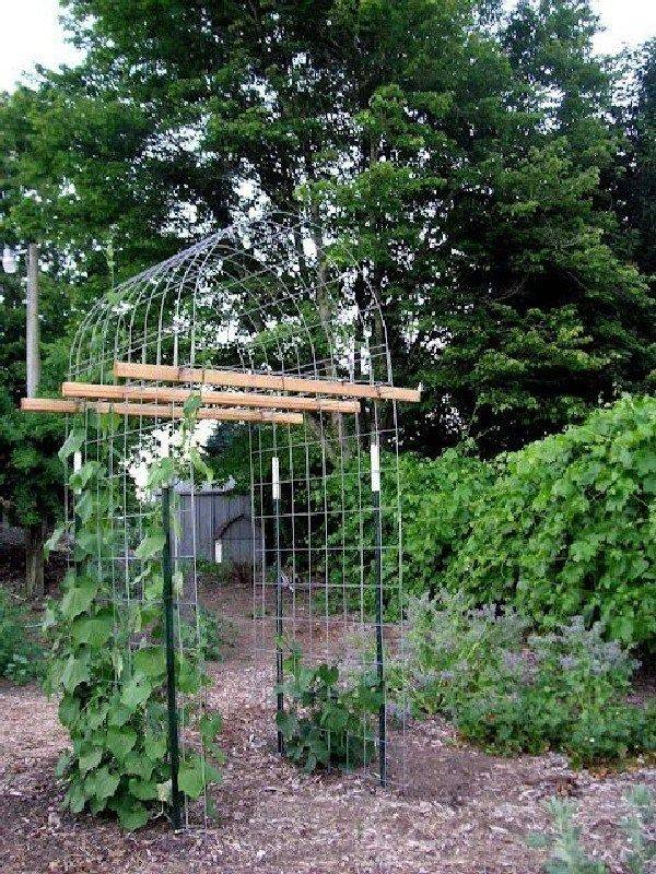 diy garden easy-451556300136891133