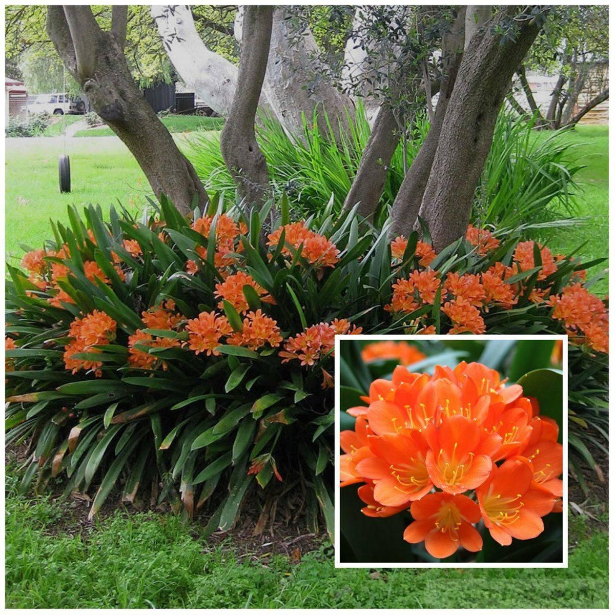 tropical garden ideas-835628905836069091