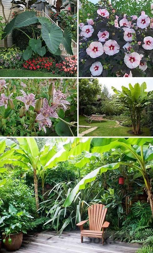 tropical garden ideas-148407750200365675