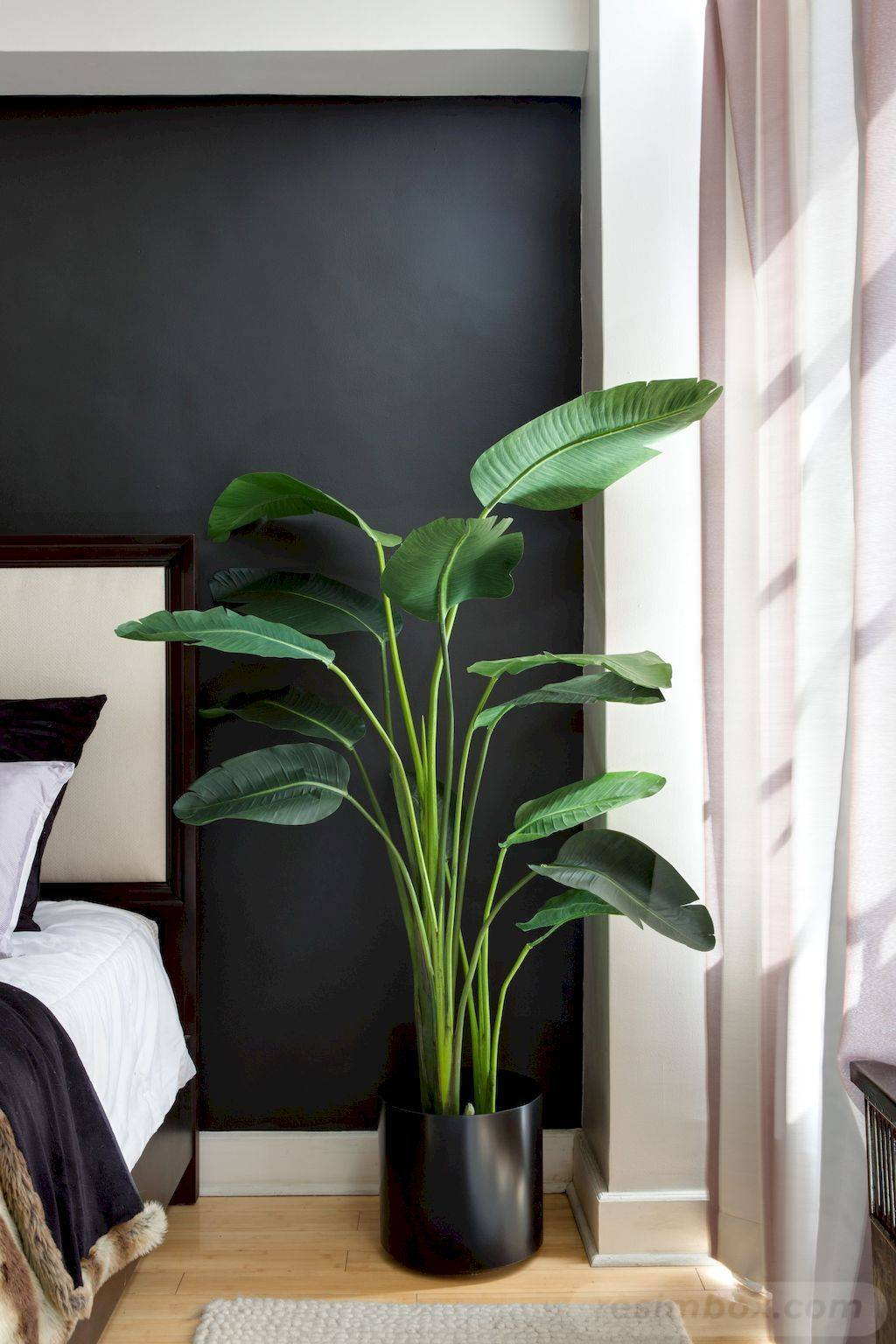 tropical garden ideas-797770521471303968