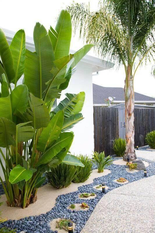 tropical garden ideas-824158800536824736