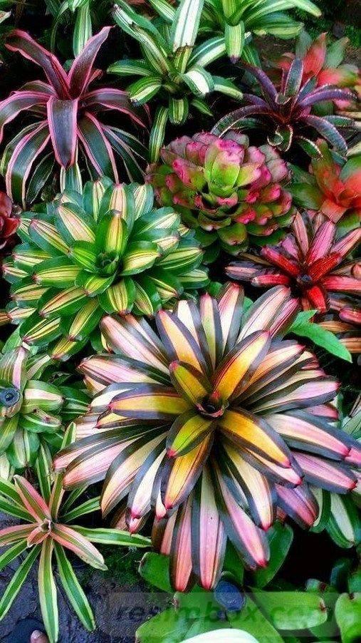 tropical garden ideas-589690144938734589