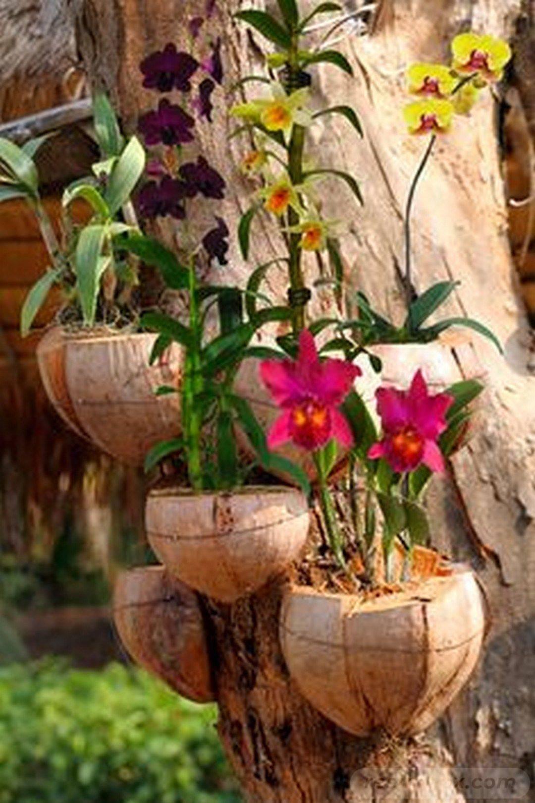 tropical garden ideas-403564816607305843