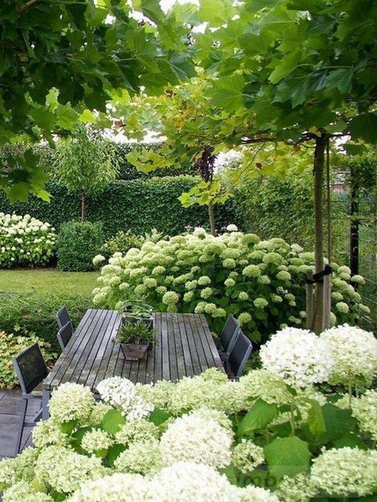 tropical garden ideas-620230179911883298