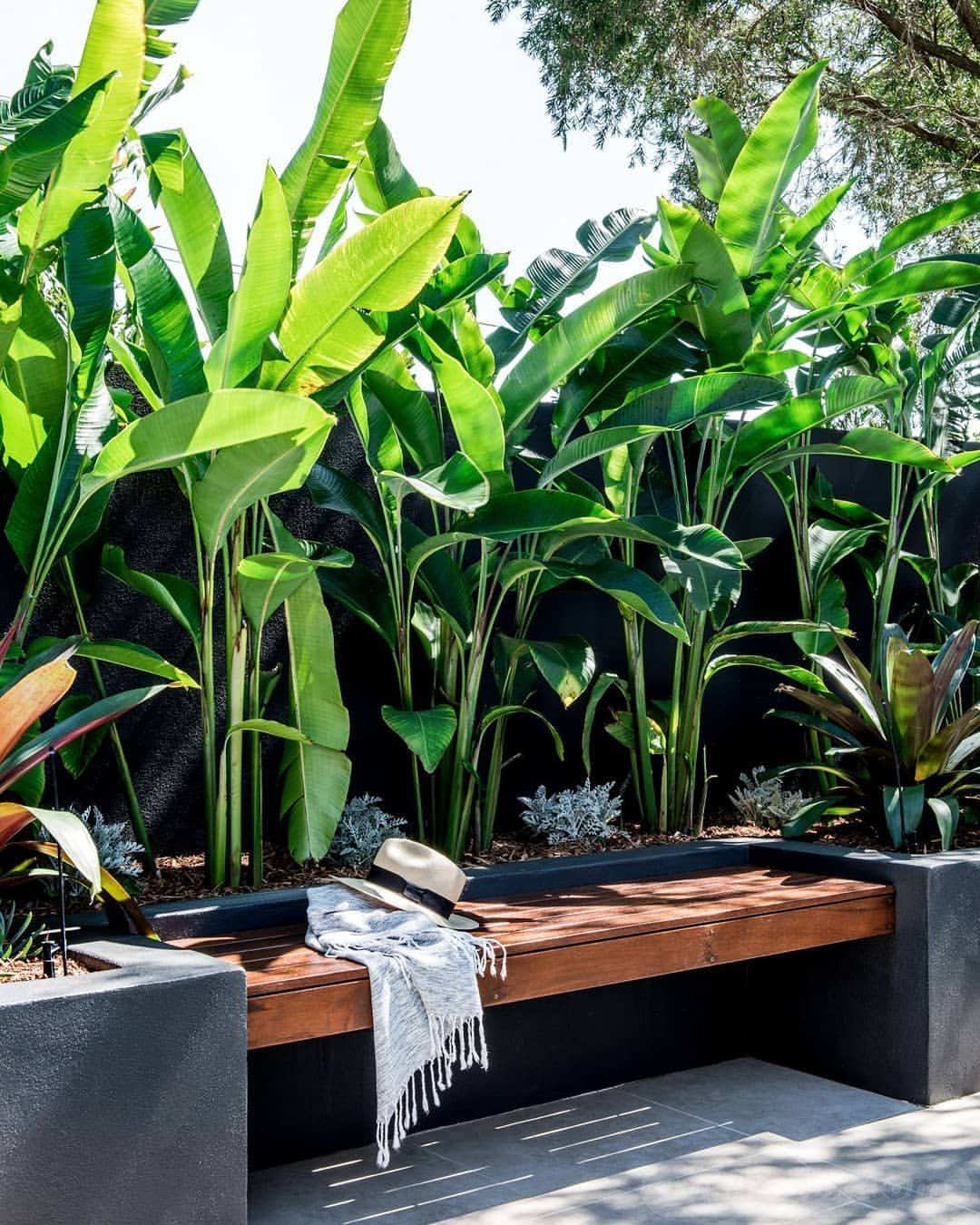 tropical garden ideas-339177415686071068