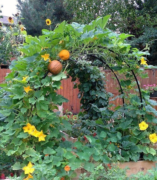 diy garden easy-137359857366175675