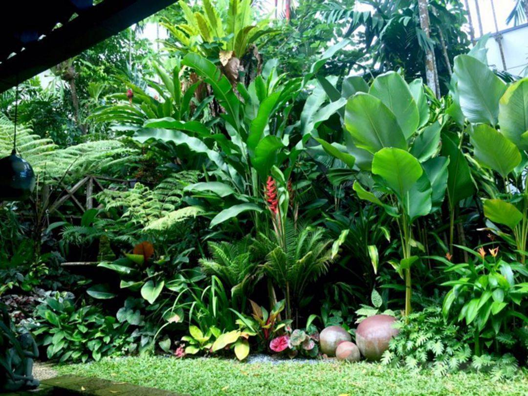 tropical garden ideas-602989837589322534