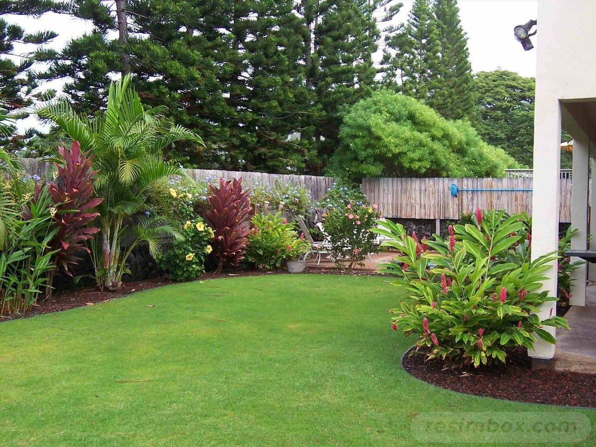 tropical garden ideas-473159504601398898