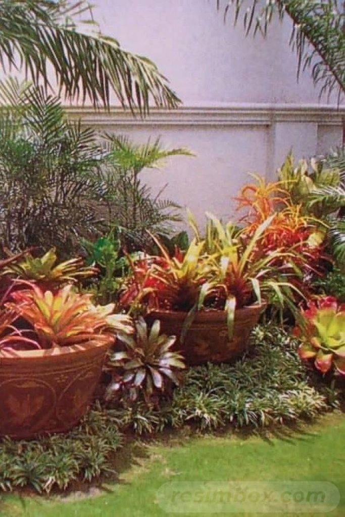tropical garden ideas-733664595528168662
