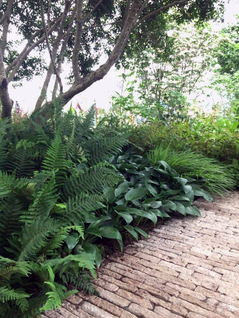 tropical garden ideas-629941066609076405