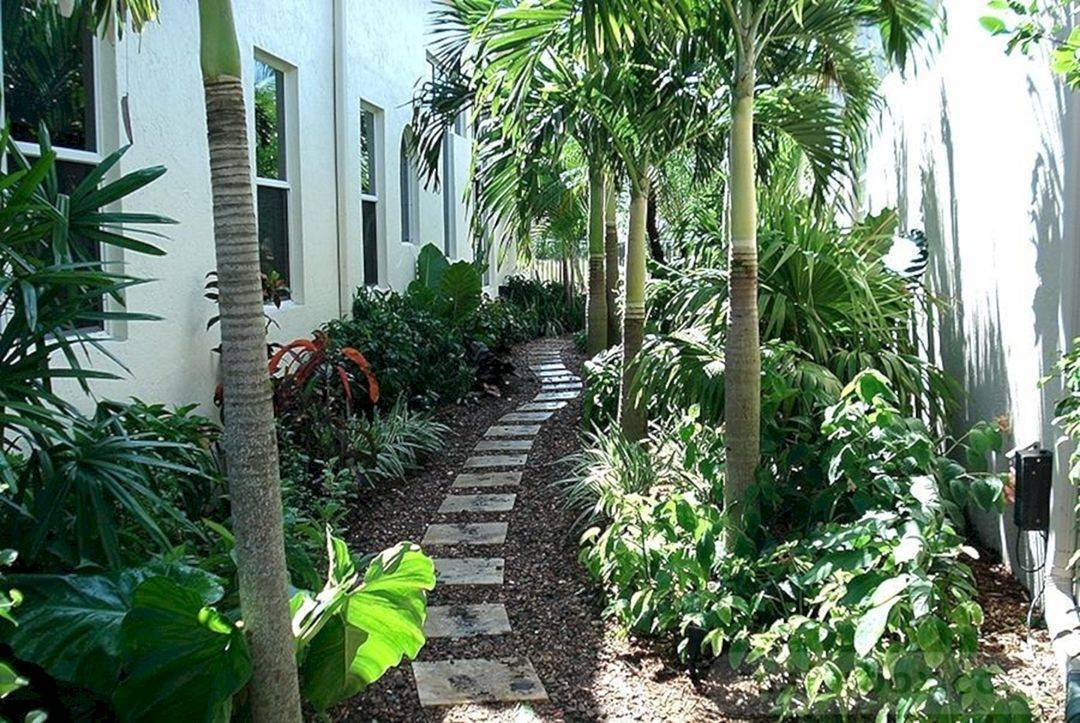 tropical garden ideas-411797959676133824