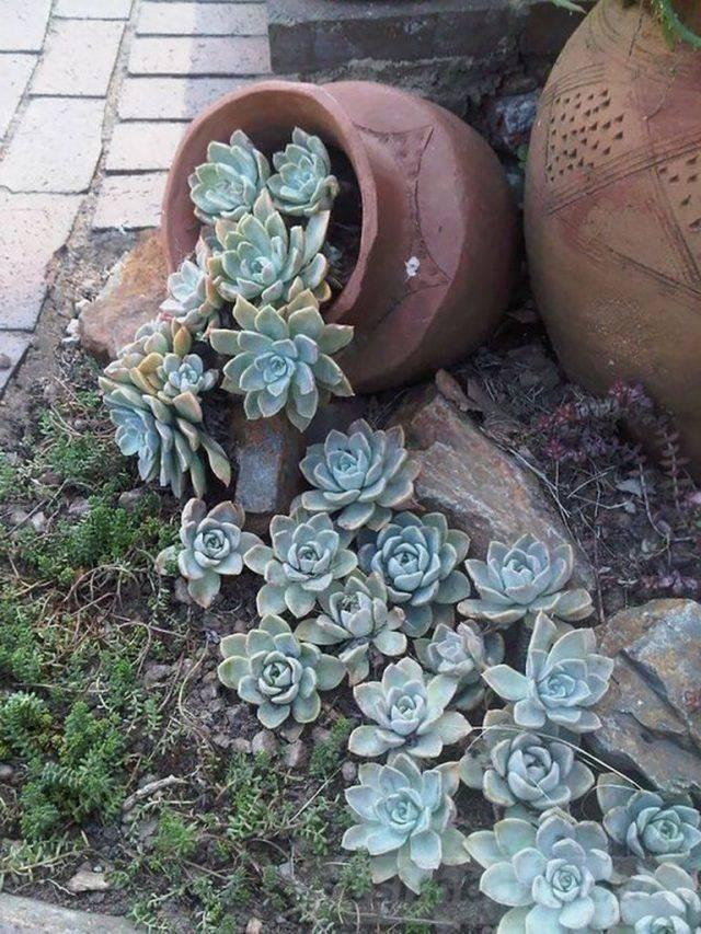 creative garden ideas-642114859352497376