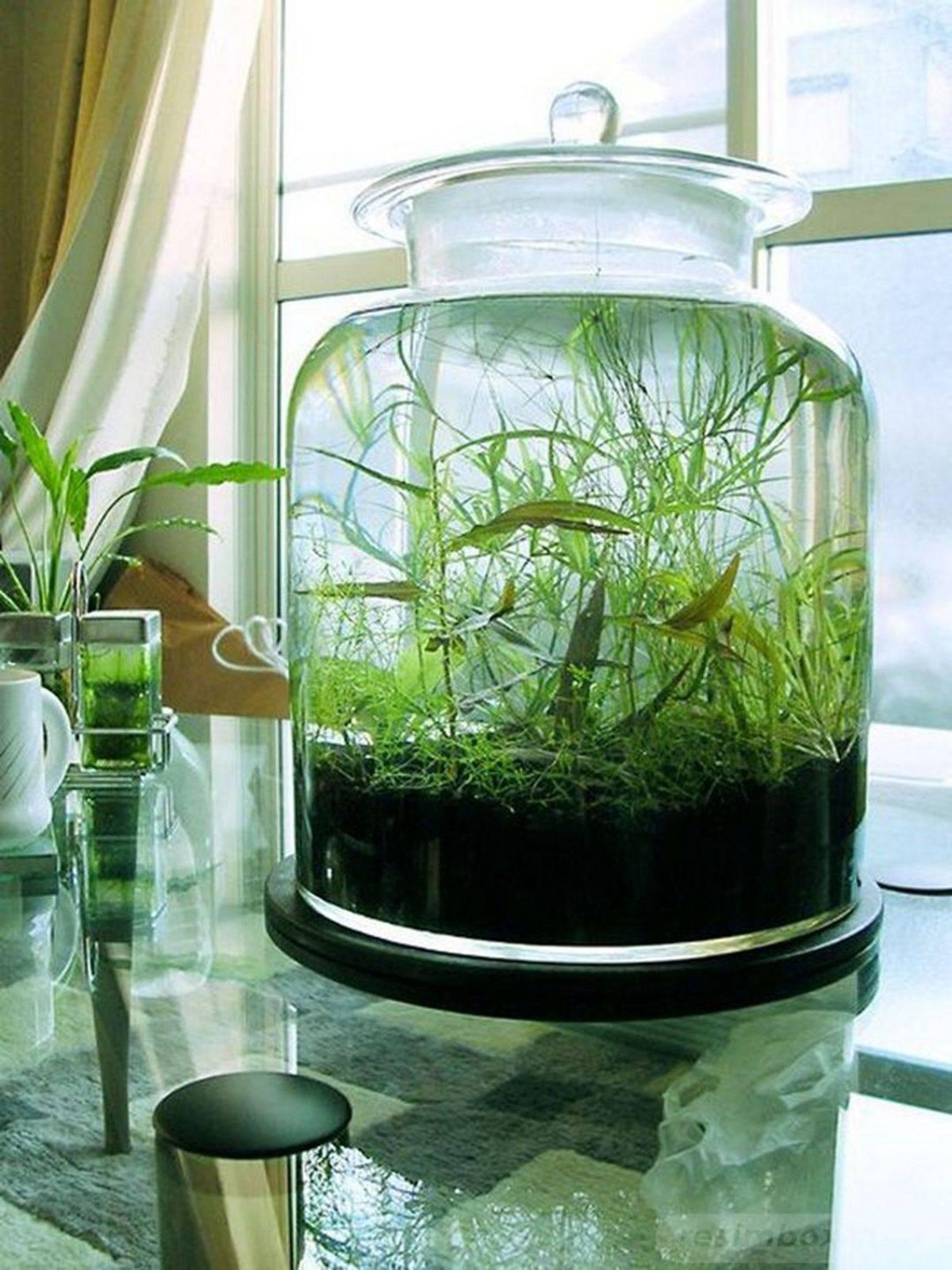 creative garden ideas-597219600564401551