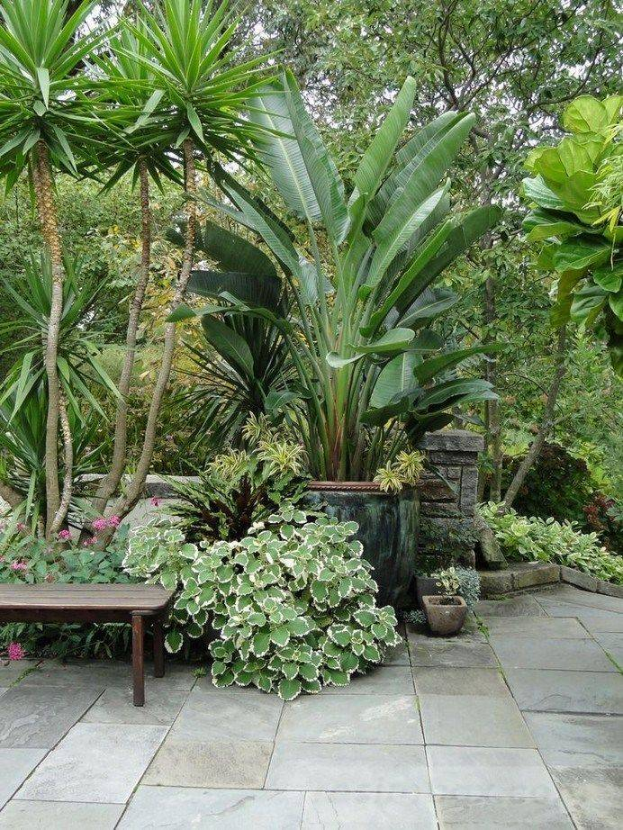 tropical garden ideas-589690144938734580