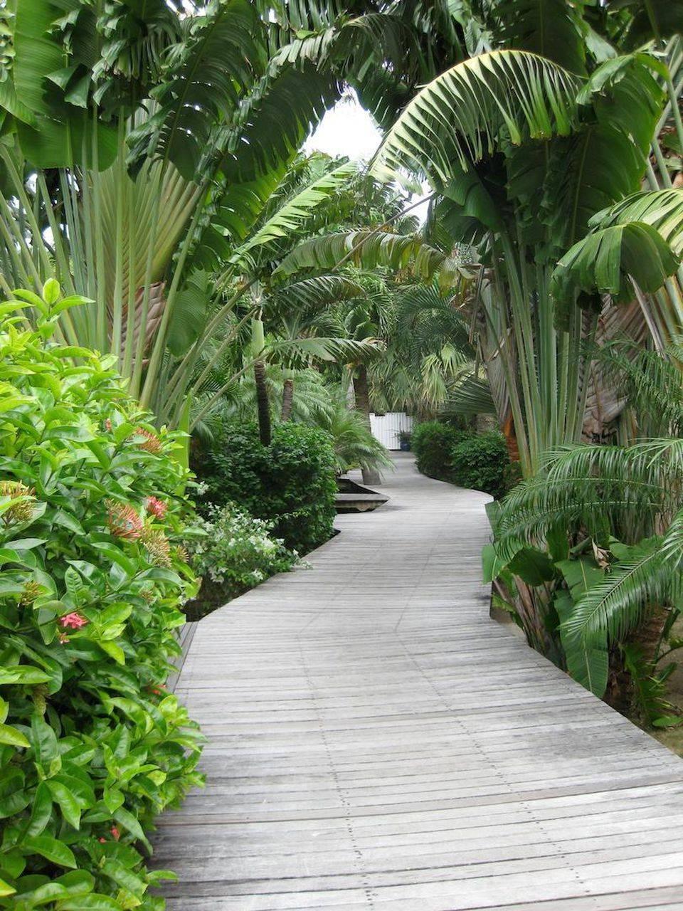 tropical garden ideas-572872015097506257