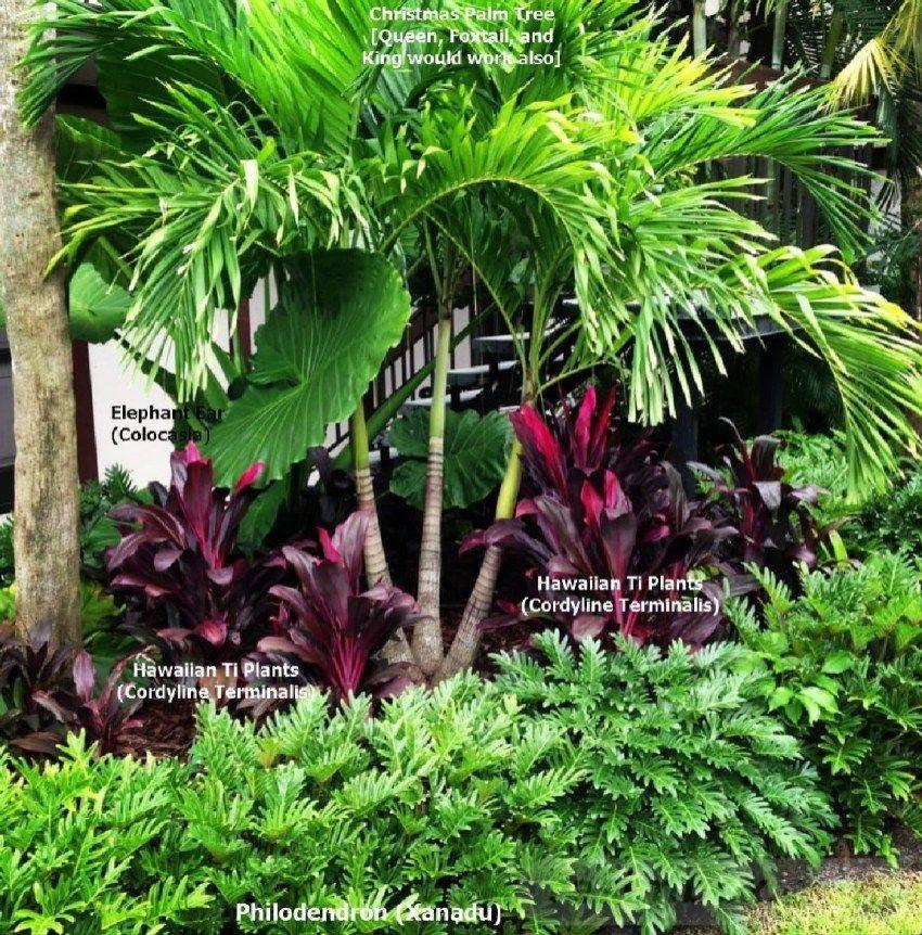 tropical garden ideas-495677502737383941