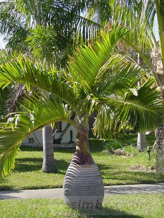 tropical garden ideas-505599495666861891