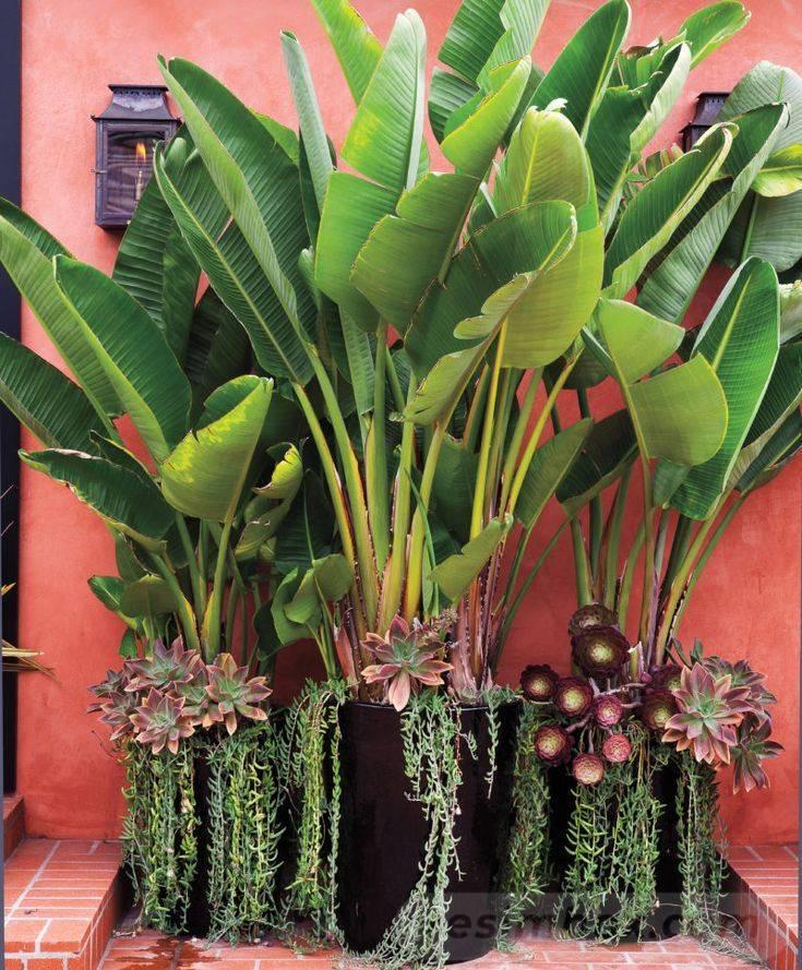 tropical garden ideas-449867450278017698