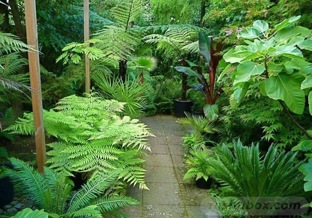tropical garden ideas-507147608038013415