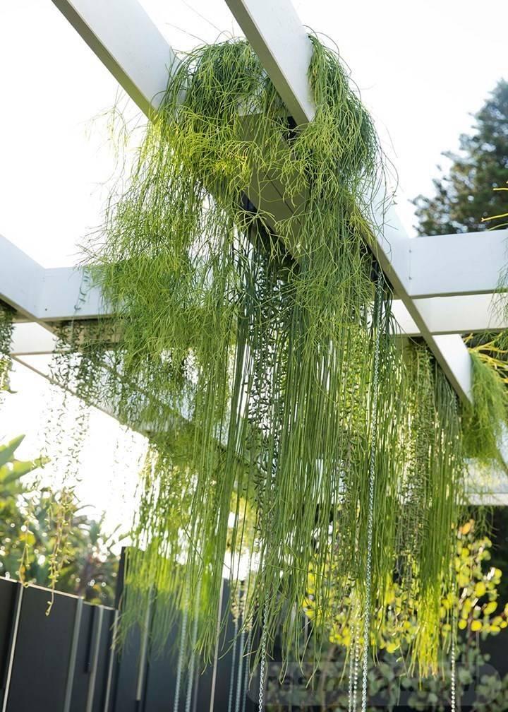 tropical garden ideas-426082814745516589