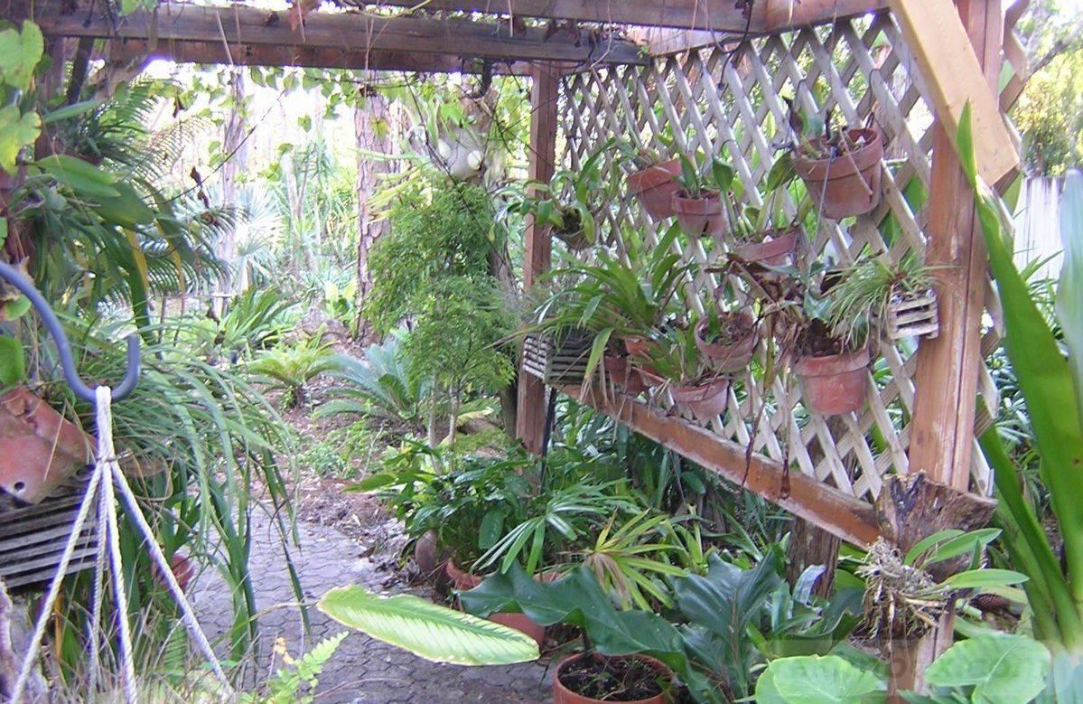 tropical garden ideas-473159504599744975
