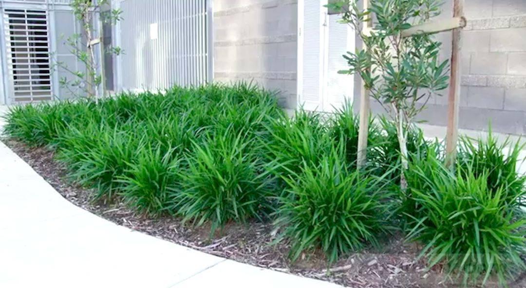 tropical garden ideas-475129829438050604