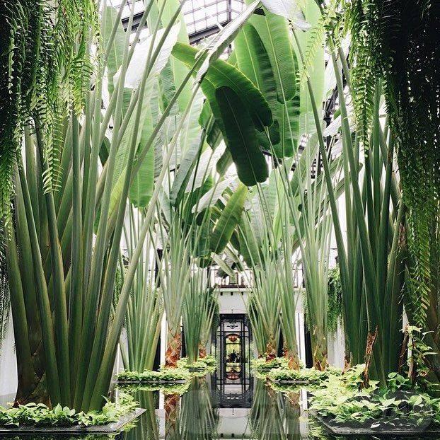 tropical garden ideas-AUYS5yHcLoxDNqTrFp-tU5FaFiokjFGuyM9q4hGi-PRvnL_lPYXxMBQ