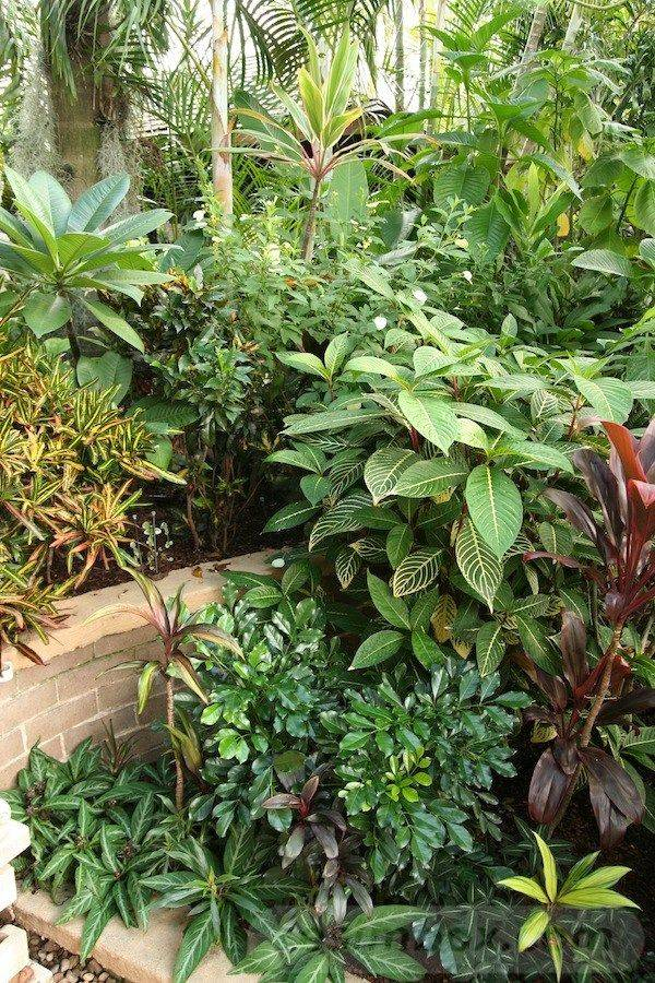 tropical garden ideas-837317755702214532