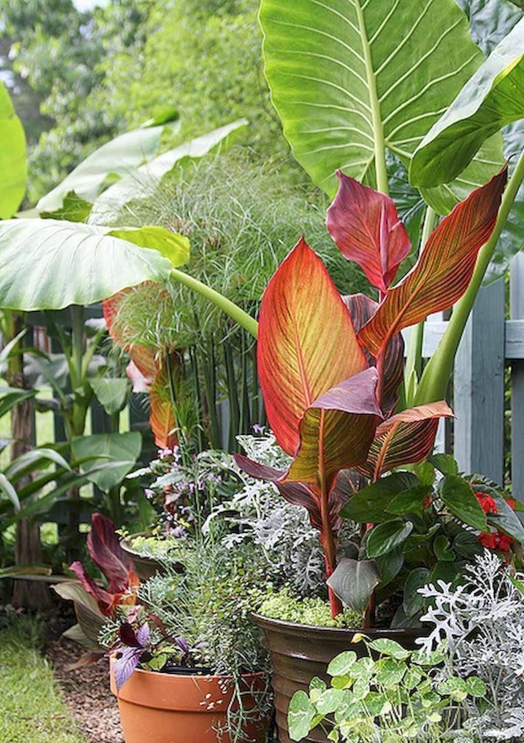 tropical garden ideas-859624647606543000