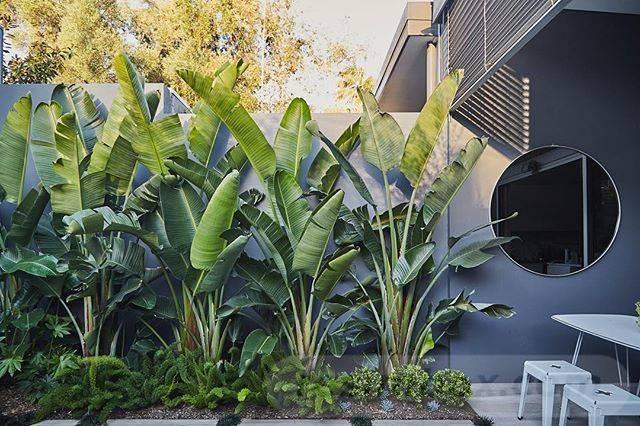 tropical garden ideas-536632111847888893