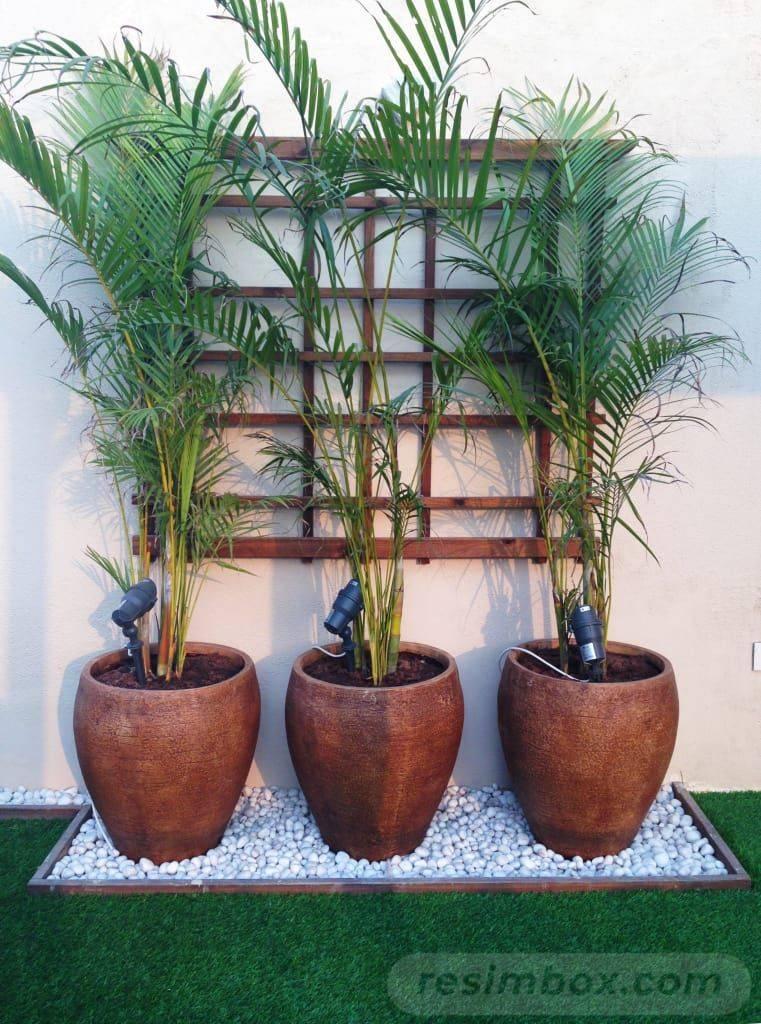 tropical garden ideas-600949144006950570