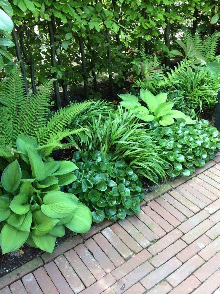 tropical garden ideas-814377545100413400