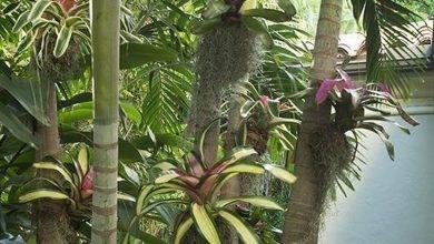 21 Most Popular Small Tropical Garden Ideas