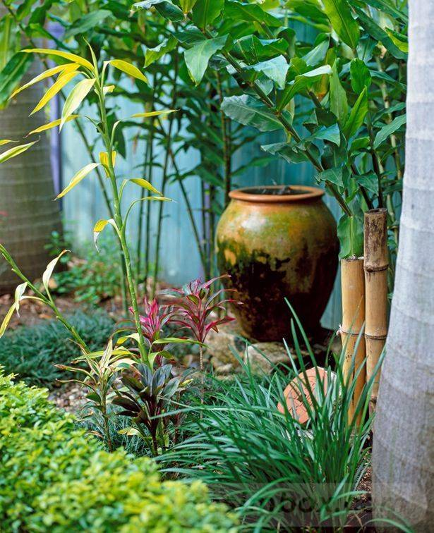 tropical garden ideas-516858494733942401