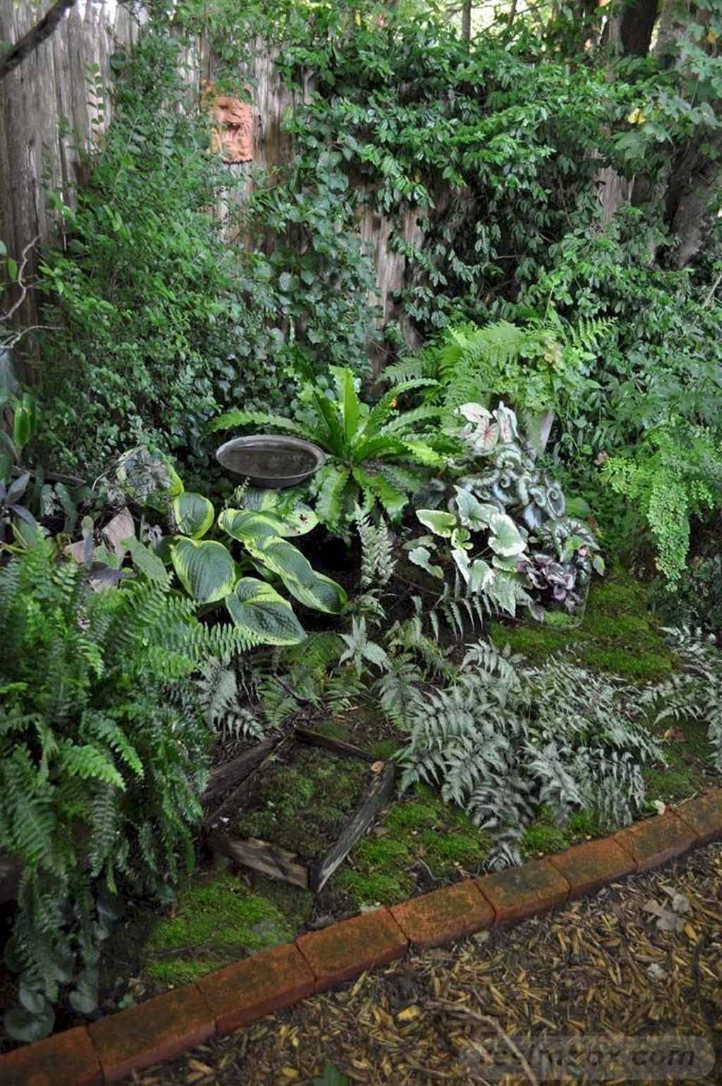 tropical garden ideas-435934438931876137