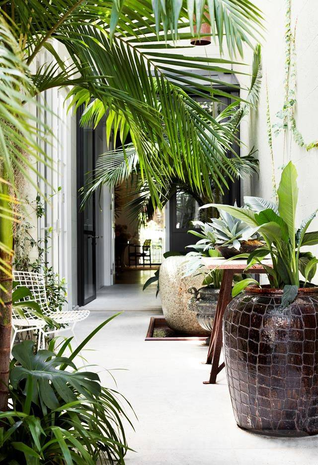 tropical garden ideas-484840716132340749