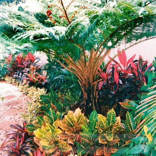 tropical garden ideas-331577591316580683