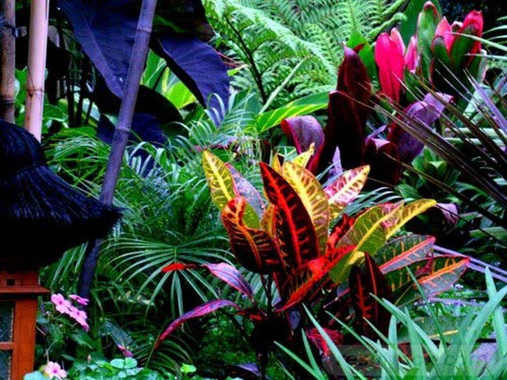 tropical garden ideas-469992911112411960