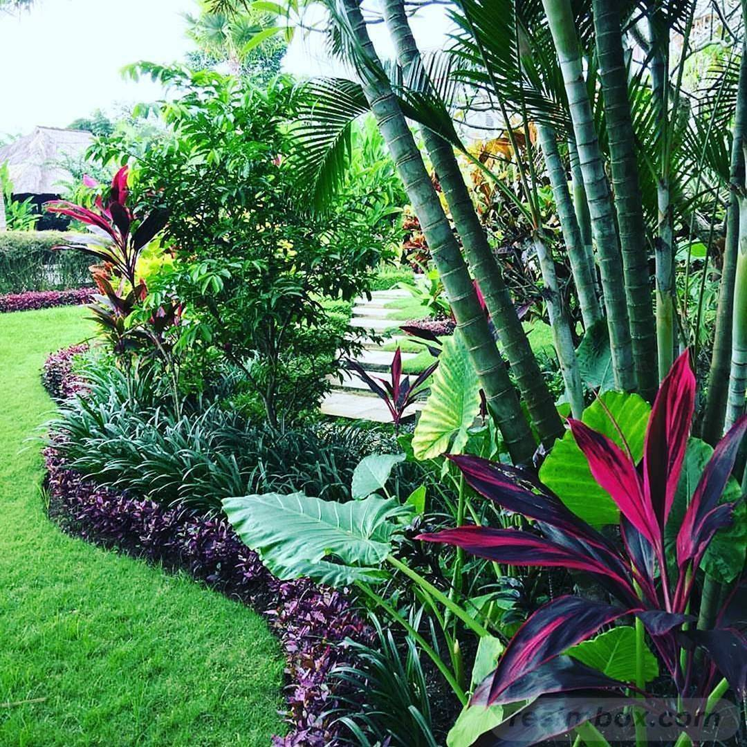 tropical garden ideas-294985844343618623