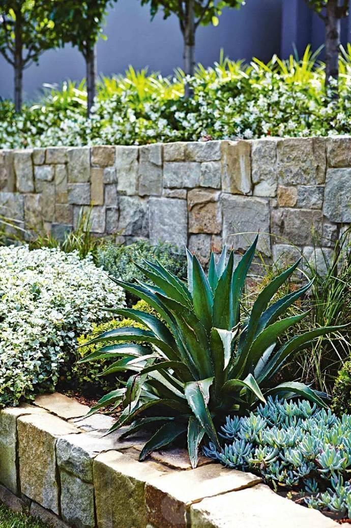 tropical garden ideas-302163456249115490