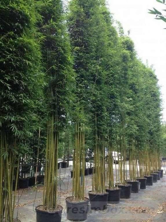tropical garden ideas-422634746281236095