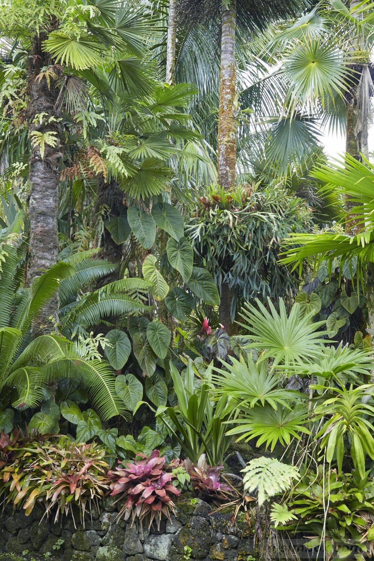 tropical garden ideas-187743878201672189