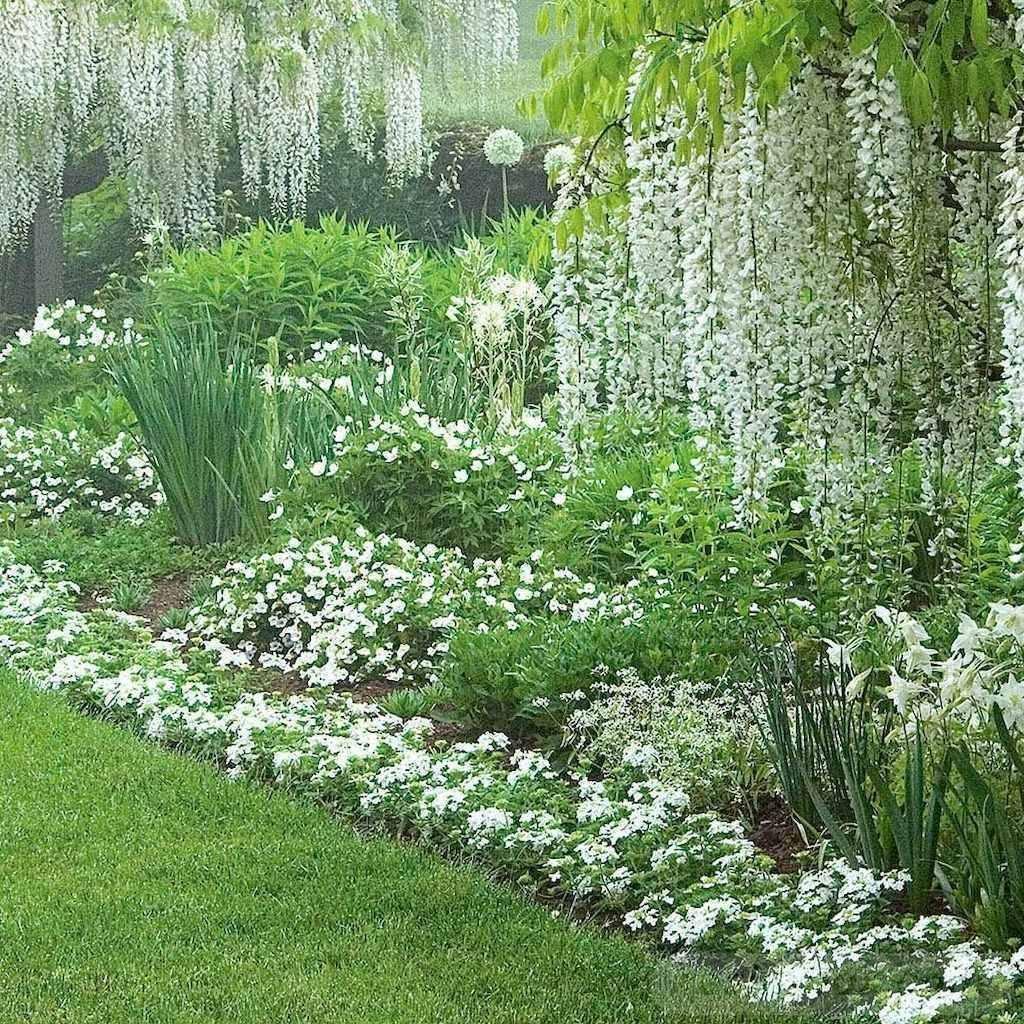 tropical garden ideas-459719074463536286