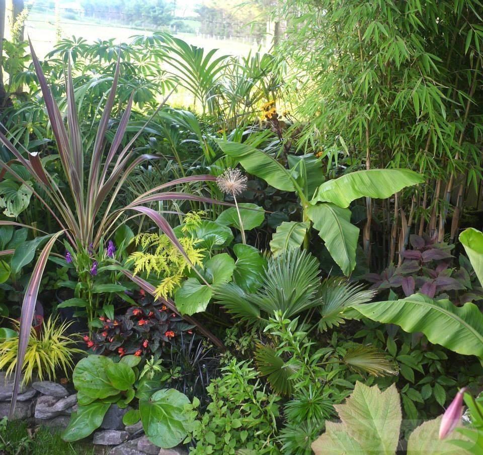 tropical garden ideas-103442122678505648