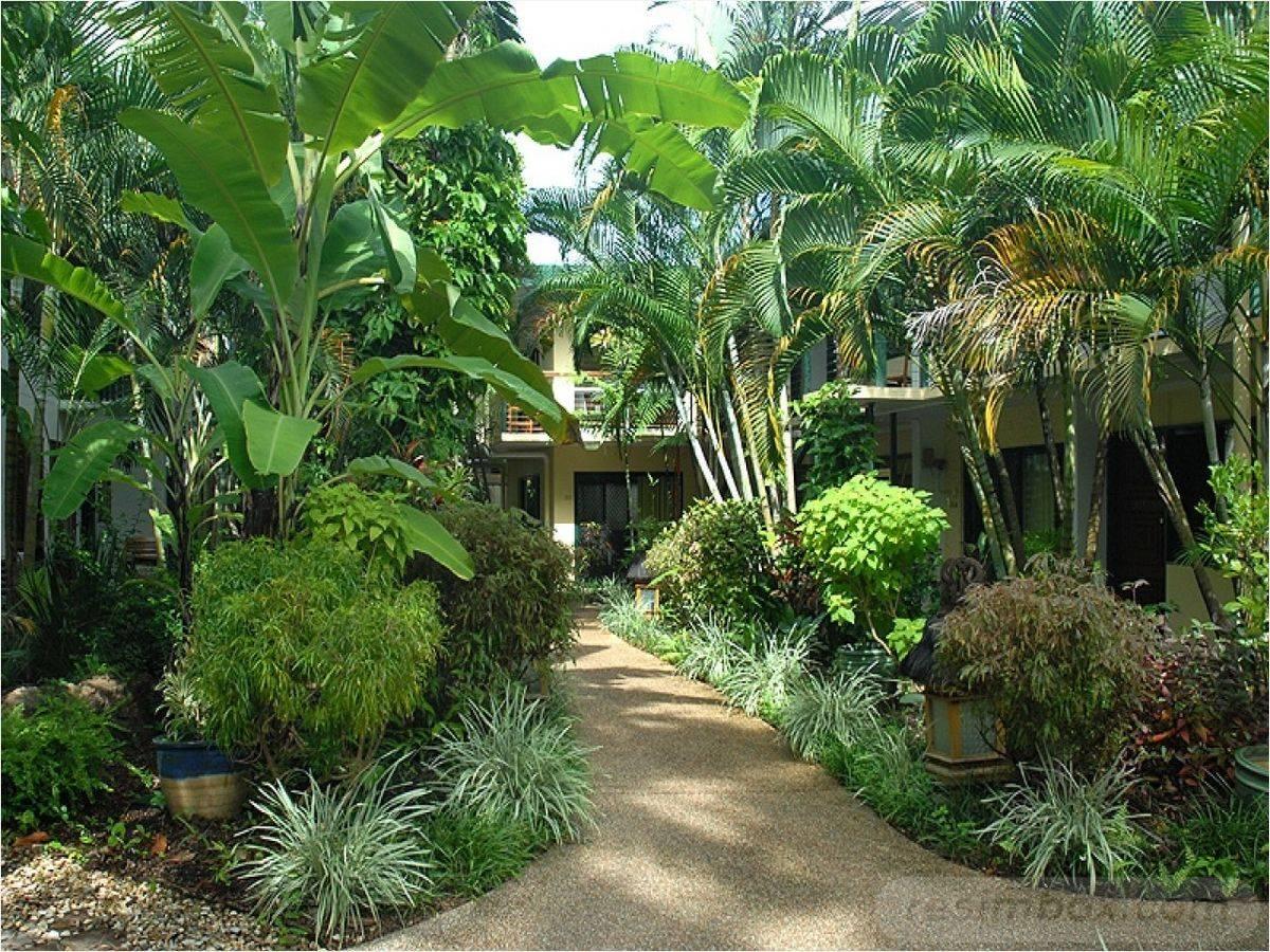 tropical garden ideas-490681321900276516