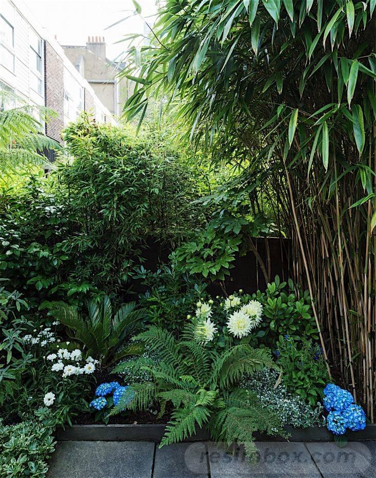 tropical garden ideas-504755070736908797