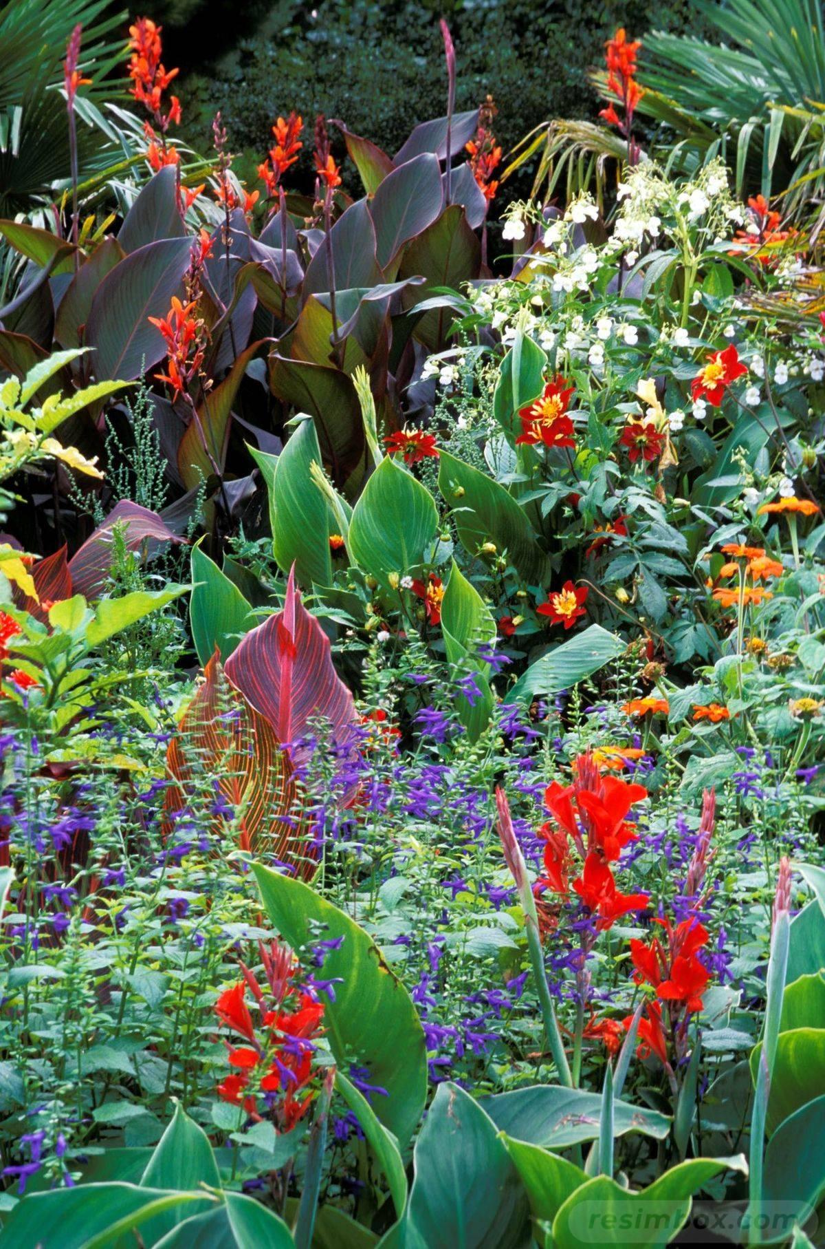 tropical garden ideas-567523990543453915