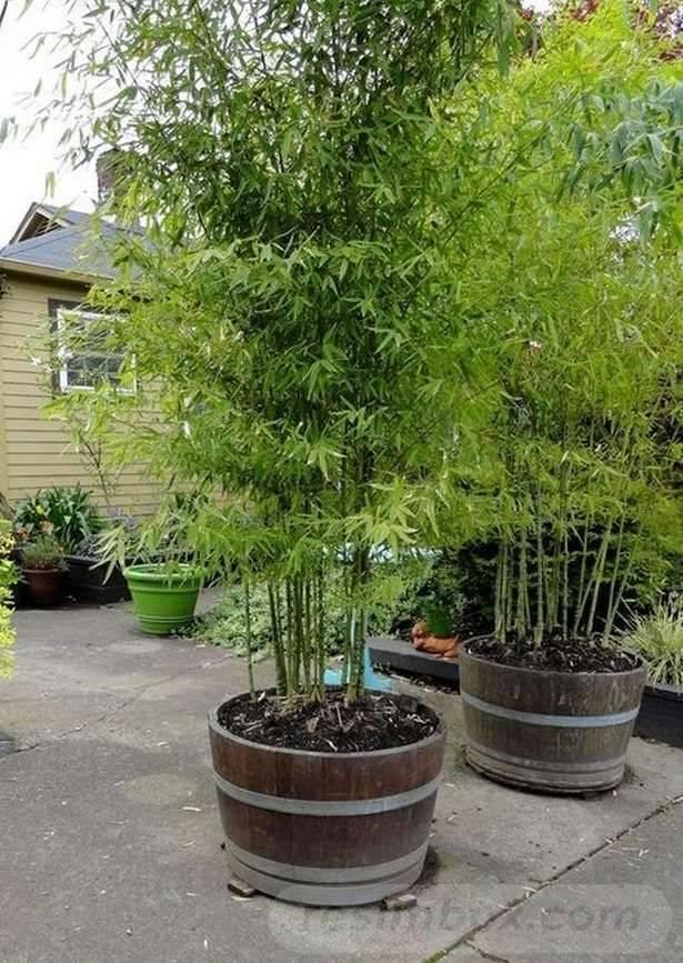 tropical garden ideas-135741376255903960